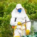 Pestisida Pada Sayur dan Buahan Menimbulkan Bahaya Bagi Tubuh Manusia